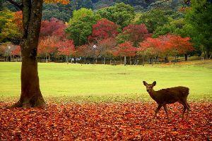 7774 - (株)ジャパン・ティッシュ・エンジニアリング おはようございます~♪  昨日は奈良公園へ 紅葉の見頃はまだまだでしたけど 人人で混雑してました。
