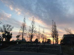 物を捨てて シンプルを目指すには~☆ 桜が咲きました🌸 今年も東北に行きたいです  色々な病いのストレスで 鬱になったようです😭