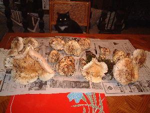 車中泊での旅のノウハウ 広島が出身なので日本では裏山に松茸取りに行きました、バンクーバーに来て松茸が取れると聞いて最初に行っ
