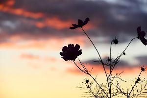 演歌界に新風を巻き起こす新人・津吹(つぶき)みゆがデビュ-だ~~ 津吹みゆ(つぶきみゆ) 「会津・山の神」 「わたしの門前仲町」  歌詞の中に「会津魂」が出てくるが、