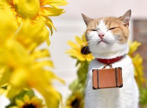 猫式ニャム ニャム!!師匠、yumeさん、動物園のみなさん、おはようございます。