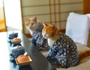 猫式ニャム ニャム!!師匠、yumeさん、動物園のみなさん、おつかれさまでした。 ニャム!!師匠、今日もありがと