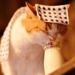 猫式ニャム にゃ🐈