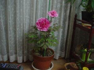 ゆっくり、明日を未ながら貴方と話したい。 台風一過で、 ここんとこ風が涼しくなってきました。 そちらは如何ですか?  お好きな花を送ります。
