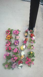 ●・見たい?見せたい? こんばんは  日曜一日中  花苗、花壇  植え替え一  終りました  わあ  (-.-)