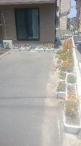 ●・見たい?見せたい? ゆうさん  こんばんは  台風🍃🌀☔花壇、避難、違い、炎天下  枯れ枯れ花壇の、移動、移動、移動中