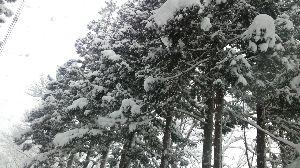 *言葉の芽* 雪…  重い雪です  運転気をつけなきゃ