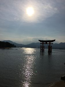 お話しましょう こんばんは★  沖縄は梅雨入りしましたね。長崎の梅雨入りも遠くないですね。  深山霧島!調べますね。