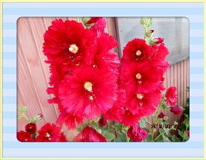 とうとうやってきました・・・・・ 部屋に心地よい風が入り込み快適な夏日に・・・  陽射しが強いので庭に出ると暑さ感じるね・・・  庭の