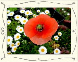 とうとうやってきました・・・・・ とうとう25度オーバーの今年一番の夏日に・・・  庭の花たちも目覚めて元気に咲いてるね・・・  これ