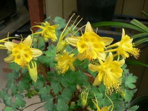 花が咲き、実が生ったら          こんばんわ りこさん。    ジャスミンなんて優雅な花卉は植えたことないが、花が終