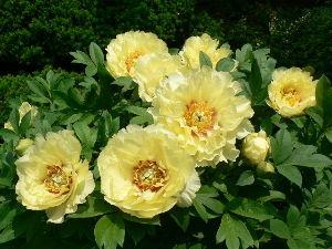 花が咲き、実が生ったら         お早う御座います りこさん。   今日は朝から快晴になって、暑い太陽の光が周囲に照射