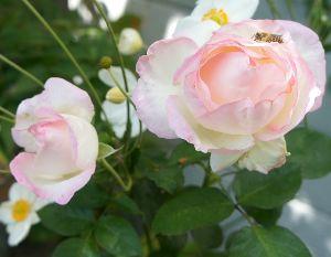 映画についてのひとりごと (連投になります) お花の上で蜂がゆっくりと気持ち良さそうです。夏だったと思います。 こちらも少し日