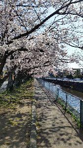 映画についてのひとりごと ショーシャンク様 みな様 こんばんは。  やっと静岡の桜も満開になりました。 今年は、地球温暖化の影