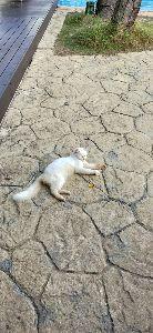 7974 - 任天堂(株) アリビラの〜ブール横に寝ていた〜猫ちゃんと仲良くなりましたよ〜!