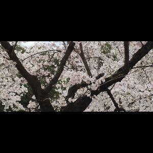 7974 - 任天堂(株) おまん亭は〜予定では〜今日の〜夕方に〜東京へ帰るはずだったのですが〜 猛雪☃が降るとか〜よく状況が〜