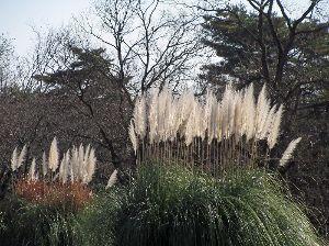 写真、楽しんでいますか~Part2 先日晴天に誘われて立川昭和公園へ行き、残り少ない紅葉を撮ってきました。園内をうろうろして約15000