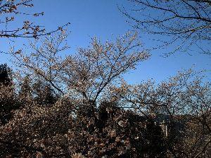 写真、楽しんでいますか~Part2 晴天続きで、今朝も冷え込んでいます。年末には寒波が押し寄せてこれまでで最低に冷え込むそうで、家に篭っ