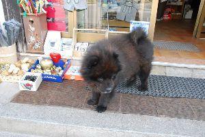 ★人生捨てたもんじゃないワ★ 我が輩は犬である。 熊ではない。