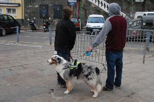 ★人生捨てたもんじゃないワ★ 正月もなんとなく過ぎた。 また新しい1年が始まる。 いったい何度目だ?  しばらくは犬の写真で凌ぐ。