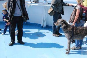 ★人生捨てたもんじゃないワ★ コルシカ島からサルデーニャ島へ渡るフェリーの上で。 左の短い足の人物は日本人。 左の長い足の犬はイタ