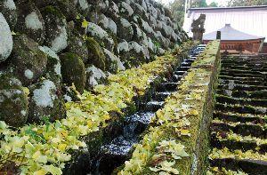 ★人生捨てたもんじゃないワ★ 今年はイチョウの黄葉ぶりが良くない。 近くの役所のイチョウの葉は黄色にならずに枯れ落ちてしまった。
