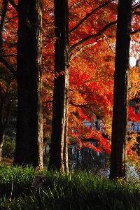 ★人生捨てたもんじゃないワ★ >北関東は寒いんですか?  北関東も平野部なら東京とあまり変らないね。 北部の山側へ行くほど寒くなる