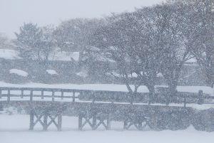 ★人生捨てたもんじゃないワ★ 明日からいよいよ本格的な冬になりそうだ。 東京の最高気温は11度の予報。 日本海側は雪になるらしい。