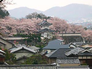通りすがりOKいずれご一緒に♪ 此れは如何かな、桜祭りが4月6日に有ります。 古い街並みを武者行列が練り歩きます。 騎馬隊の一緒です