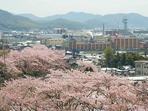 通りすがりOKいずれご一緒に♪ 此れは、龍野城を桜で埋め尽くした写真です。 立岩