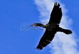 7621 - (株)うかい 連日の新高値だね。 9月に向かい  青空を飛ぶ う