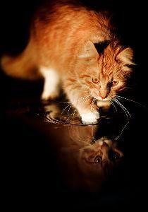 子猫を生きたまま穴を掘って埋める教師 見たくない現実から逃避して、動物愛護に逃げ込んでいるだけじゃあないのかねえ~~~