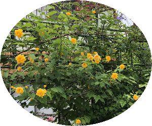 関東地方・・・お誘いの掲示板 当日曇り、夕方雨の予報が出ましたが気温は高くないようです。 アコーディカードを忘れないようにお願いし