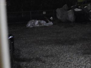 RC42型のCB750 台風で隣のバイクが倒れていました。軽いバイクの宿命でしょうね。 被害はま逃れました。