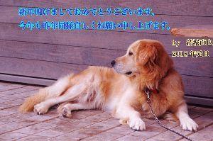 アルシオーネ 年賀状で〜す!
