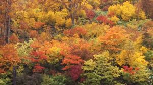 優しい時間を過ごしましょう。 こんばんは~、青竜さん早かったね(笑)  こちらは暑くならず、きちんと秋の装いを守ってます(笑) 昨