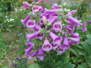 花と畑と、、、 こんにちは、 tiwさん。  お褒めのお言葉、ありがとうございます。 パートナーが喜ぶことでしょう。