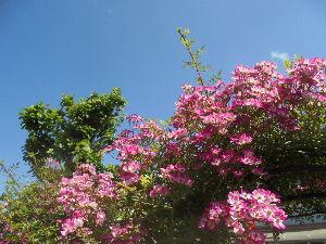 花と畑と、、、 こんにちは、 tiwさん。  早朝は14℃で、肌寒かったです。 写真ですが、楽しんでいただければ幸い
