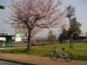 ポンコツ日記! チョッと早起きして近場をブラリしました^^  満開の桜です☆  次回はもっと遠くへ行きましょうかね♪