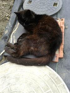 ネコ好きの集い 猫は好きだけど…  我が家の猫は好きになれない 息子が貰ってきたからです