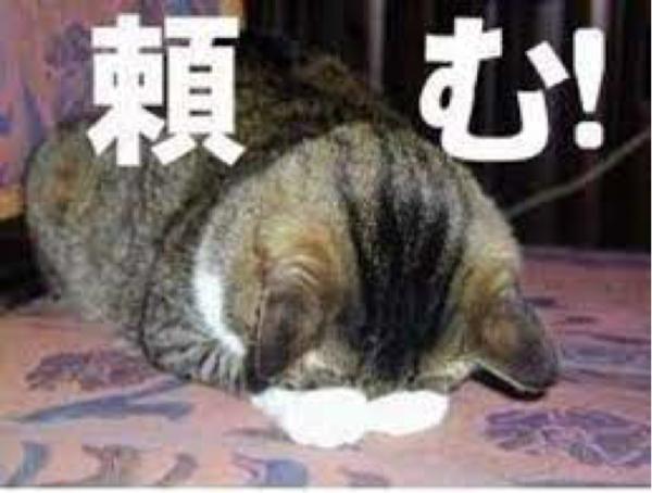 1357 - (NEXT FUNDS) 日経ダブルインバース上場投信 今日の猫( ´ ▽ ` )ノ