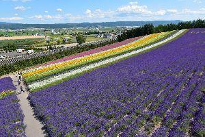 1357 - (NEXT FUNDS) 日経ダブルインバース上場投信 昨日は、ファーム富田だったんですよ。。。  >>>北海道はこの時期最高でしょう😀
