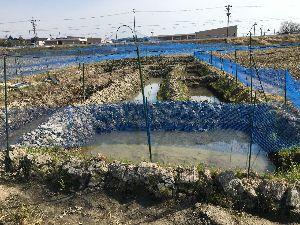 スーパーシーフの雑談の場(苦笑)2 鳥避けネットに包まれた池にも 生き物の気配が( ゚д゚)  あるがまま、自然を愛しなさい!