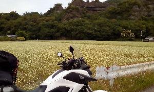 山口よりトコトコ走り隊 志高湖よりの帰り道 耶馬渓の羅漢寺手前の蕎麦畑が満開でした!!