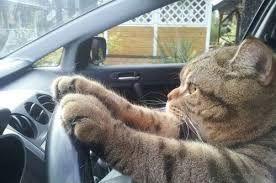 8086 - ニプロ(株) さぁ、明日もしっかりハンドル握って安全運転で参りましょ😍 。。。( ̄ー ̄)ニヤリ