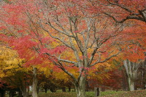 ツーリング好きな女性はおられますか? 良い天気に促されて、北播磨余暇村公園まで行ってきました。 紅葉の見頃という情報でしたが、すでにピーク