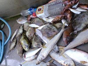 熊本県南の釣り 本命は1っぴき@@残念~  他 虫餌50グラムで晩御飯のおかず釣りで 沢山釣ってみた^^  太刀魚が