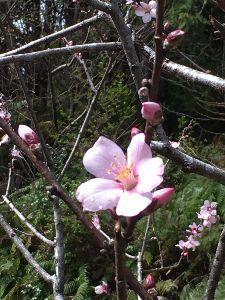 大動脈解離・不整脈・肉腫・高血圧・高脂血症、時々糖尿おまけに慢性腎臓病? 天気が良かったし、相方の仕事が休みだったので果樹公園に行きました。 気持ちよく春を満喫しました。 助