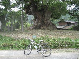 ポタリング専用 早朝サイクリングはお休み 昼から ちょっと遠出のお散歩サイクリング  今日(6/17)の走行  距離