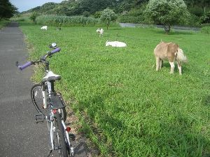 ポタリング専用 今日はお天気がよかったので 午後3時半よりぶらりと ホームグランドの 今川サイクリング道路  走行距